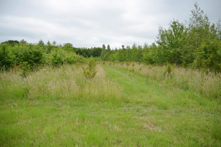 Prince's Wood